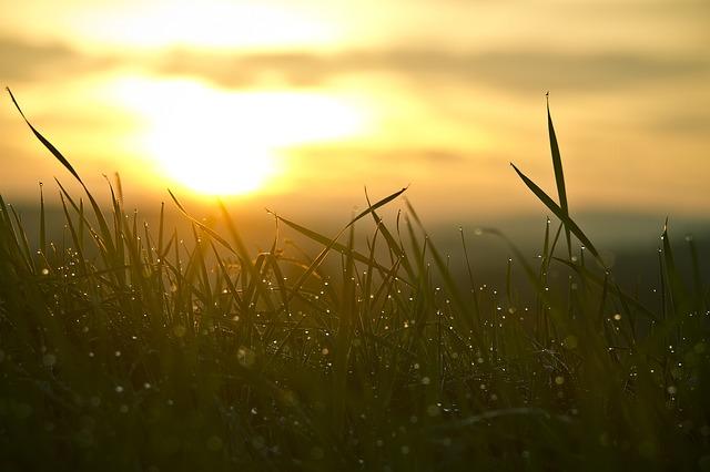 grass-546794_640