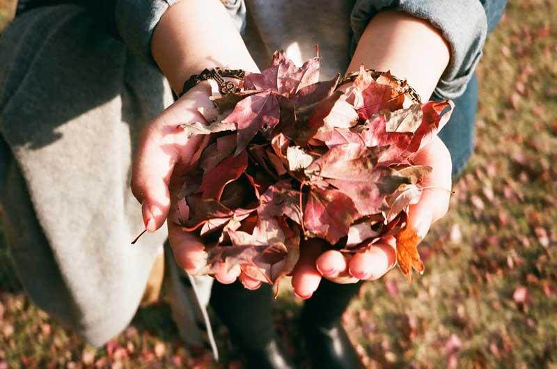 leaves-925118_1280