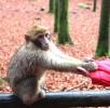 Affe-wildpark-aaawww