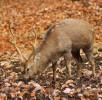hirsch-wald-wildpark-daun