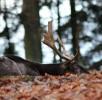 hirsch-wildpark-daun