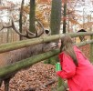 hirschkuss-wildpark-daun