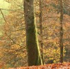 wald-wildpark-daun