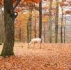 wildpark-daun-hirsch-weiss