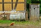 chickens-953630_640