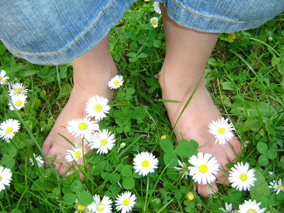 daisy-319695_960_720