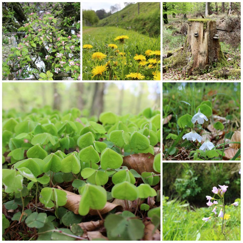 Wo wandern in NRW Schwalenberger Wald Naturparktrail DieCheckerin