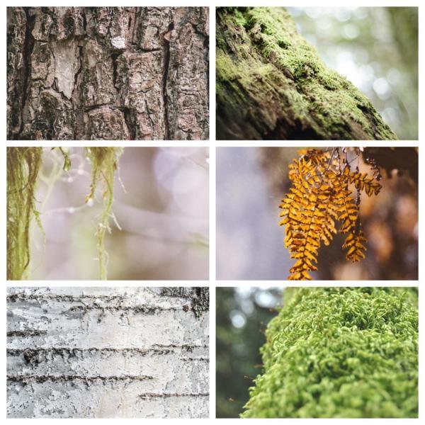 Wald der Wisente Wisentgehege Hardehausen
