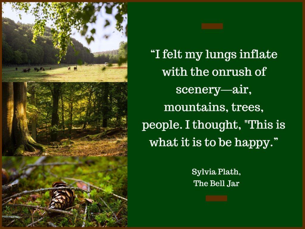 Im Wald der Wisente Wisentgehege Hardehausen